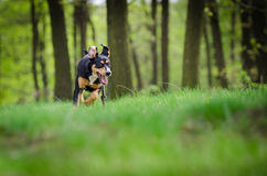 Beautiful dog portrait in the middle of the forrest in spring Stock Images