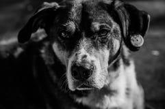 Beautiful Dog Portrait Stock Photo