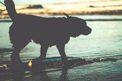Dog silhouette on water at the beach stock image