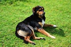 Beautiful dog sitting down Royalty Free Stock Photo