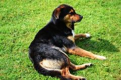 Beautiful dog sitting down Stock Photos