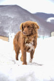 Beautiful dog in the snow Stock Image