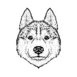 A beautiful dog. Vector illustration for a postcard or poster, print on clothes.  Royalty Free Stock Image