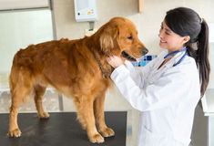 Dog at the vet Royalty Free Stock Photos