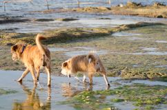 Beautiful dog washing his paws in salt pans on low tide stock photos
