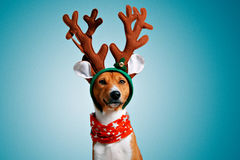 Beautiful dog wering christmas costumes stock photography