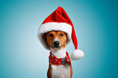 Beautiful dog wering christmas costumes Royalty Free Stock Images