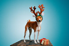 Beautiful dog wering christmas costumes Stock Photos