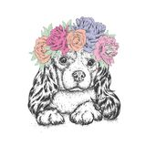 A beautiful dog in a wreath of roses and peonies. Flowers. Cute Spaniel. Purebred puppy. Royalty Free Stock Photos