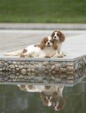 Beautiful dogs stock photo
