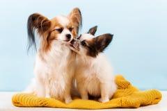 Mom dog kisses puppy