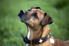 Beautiful Dogs Portrait close up Royalty Free Stock Images