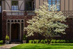 Free Beautiful Dogwood Tree In Full Bloom In Sunshine In Front Of Entrance To Tudor Style Home In Shade Behind Stock Photography - 172406332