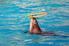 Beautiful dolphin Stock Photos