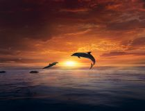Beautiful dolphin jumping from shining water stock photos