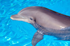 Beautiful dolphin in the water Stock Images