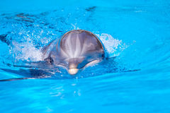 Beautiful dolphin in the water Royalty Free Stock Photography