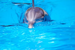 Beautiful dolphin in the water Stock Image