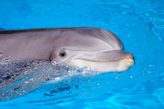 Beautiful dolphin in the water Stock Photos