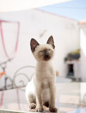 Beautiful domestic animal house cat looking forward Stock Photos
