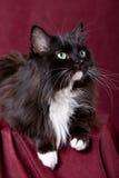 Beautiful domestic cat Stock Images