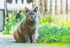 Beautiful domestic cat sitting in the garden. Cat life Stock Photography