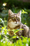 Beautiful domestic cat Stock Photo