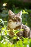 Beautiful domestic cat Stock Photo