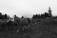 Beautiful domestic ponies in a farm