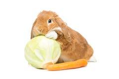 Beautiful domestic rabbit Stock Photo