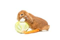 Beautiful domestic rabbit Royalty Free Stock Images