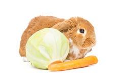Beautiful domestic rabbit Royalty Free Stock Photo