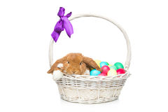 Beautiful domestic rabbit in basket with eggs Stock Photo