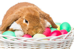 Beautiful domestic rabbit in basket with eggs Royalty Free Stock Photography