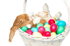 Beautiful domestic rabbit in basket with eggs Stock Image