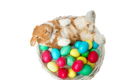 Beautiful domestic rabbit in basket with eggs Royalty Free Stock Images