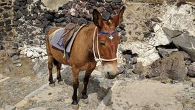 Beautiful Donkey. Donkey Taxi in Santorini Greece. Decorated with colorful accessories Royalty Free Stock Photo