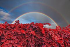 Beautiful double rainbow over a vineyard in the mountains Royalty Free Stock Images