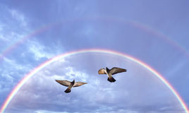 Beautiful Doves symbol of faith. Pair of Doves in the air symbol of faith over double rainbow Stock Image