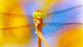 Beautiful Dragonfly Stock Images