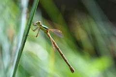 Beautiful dragonfly. Macro shot of nature. Libellula depressa. Insects up close. Royalty Free Stock Photography