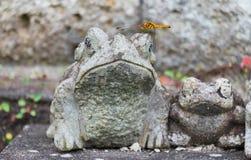 Beautiful dragonfly Stock Photo