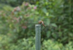 Beautiful dragonfly Stock Photos