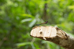 Beautiful dragonfly. Royalty Free Stock Photos