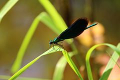 Beautiful dragonfly Royalty Free Stock Photography