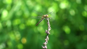 Beautiful dragonfly stock footage