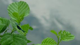 Beautiful dragonfly on a tree branch stock footage