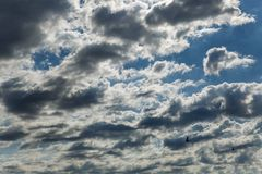 Beautiful dramatic cloud scape with greyish-white altocumulus clouds and silhouettes of flying swallows in a summer morning Royalty Free Stock Photography