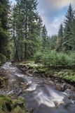 Beautiful ethereal style landscape image of small brook flwoing through pine trees in Peak District in England. Beautiful dramatic landscape image of small brook royalty free stock photography