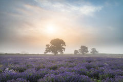 Free Beautiful Dramatic Misty Sunrise Landscape Over Lavender Field I Royalty Free Stock Photos - 75573838